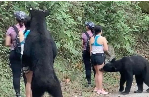 Investigarán el porqué de la castración del oso negro de Nuevo León