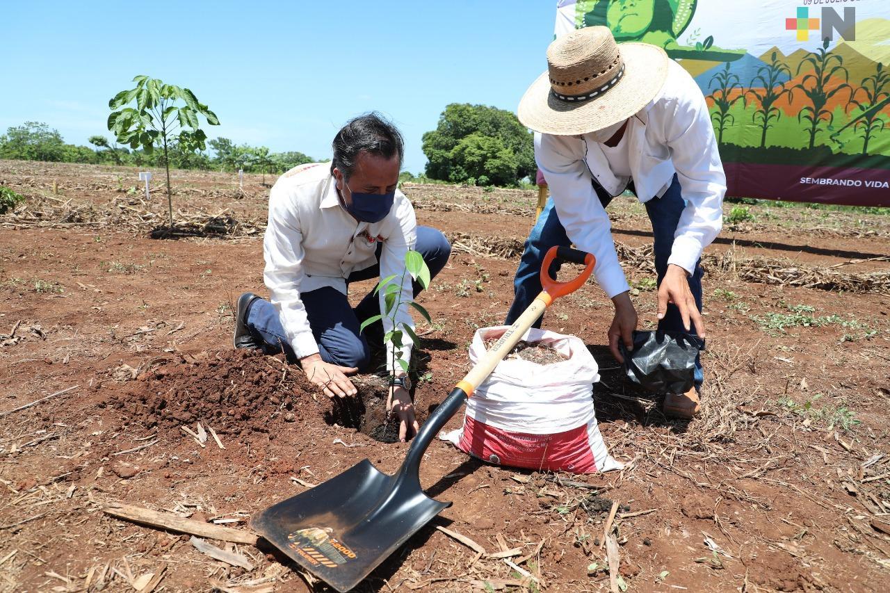 Supervisa gobernador Cuitláhuac García avances de Sembrando Vida, en Acayucan