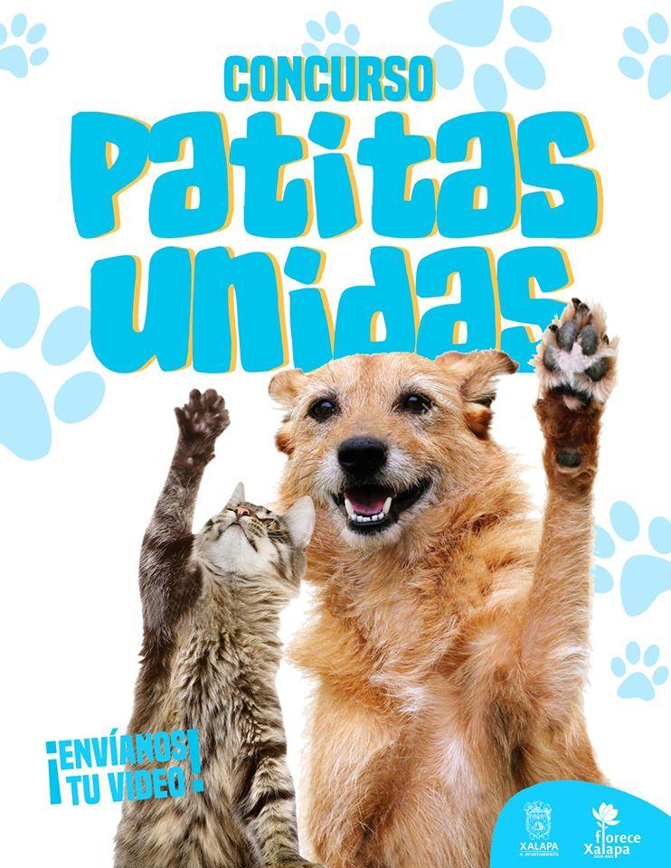 """Abren tercera convocatoria de """"Patitas Unidas"""", para concientizar sobre maltrato animal"""