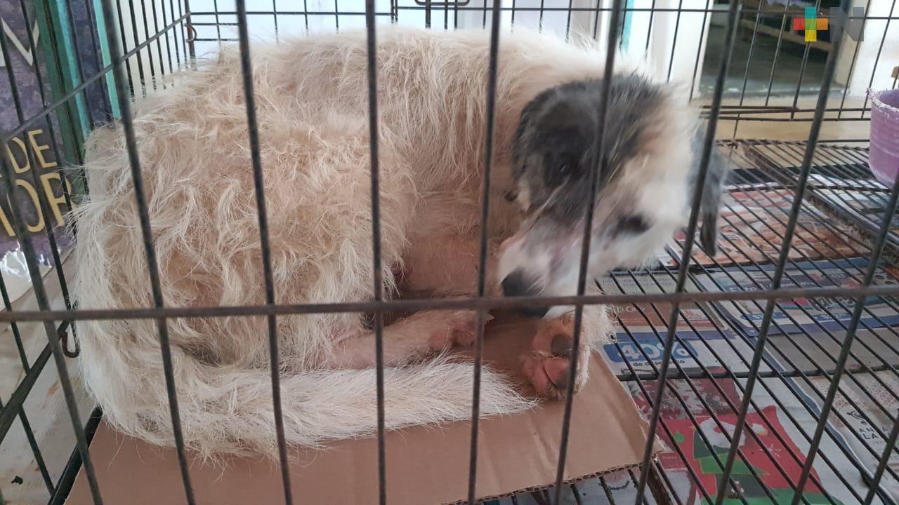 Amedea en Coatzacoalcos denuncia mala prácticas de veterinarios