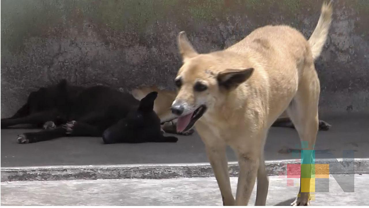 Rumor que haya incremento en abandono de mascotas durante contingencia