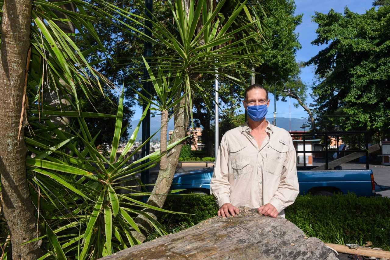 Transformarán árbol muerto en escultura modular
