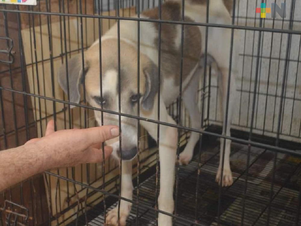 Perrito desamparado porque su dueño falleció de COVID-19, espera ser adoptado, en Coatzacoalcos