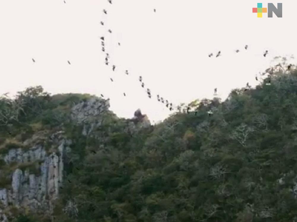 De agosto a octubre se da el mayor avistamiento de aves en Puente Nacional