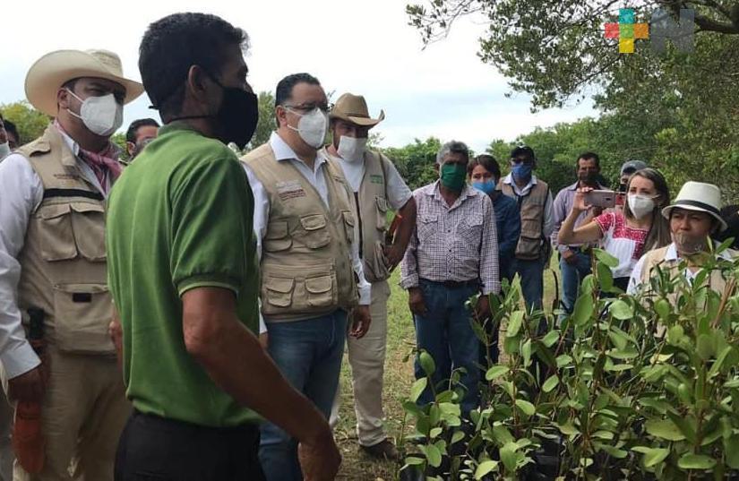 Titulares del Bienestar supervisan avances del programa Sembrando Vida  en zona norte de Veracruz