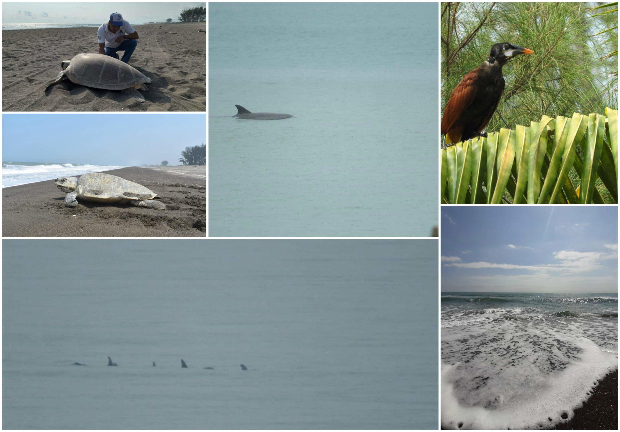 Delfines, aves migratorias y playas limpias en Nautla durante estas semanas