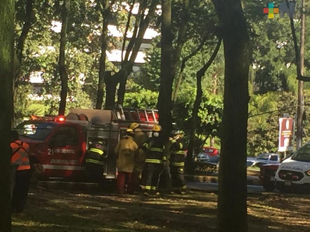 Personal del ayuntamiento y bomberos trabajan en parques y jardines de Xalapa
