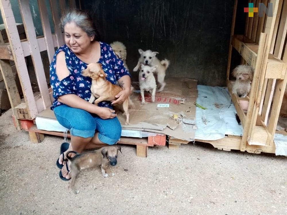 Refugio Lentejitas solicitan donaciones para alimentar a perros y gatos rescatados