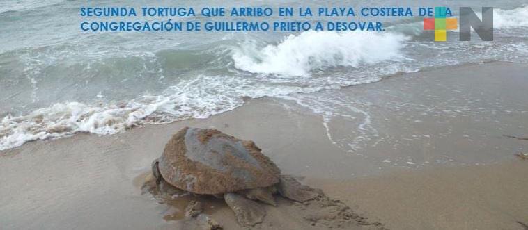 Reforzaron vigilancia para evitar saqueos de nidos de tortugas