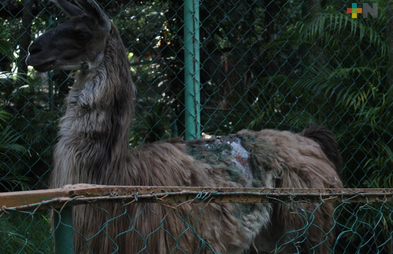 En abandono el zoológico de la ciudad de Veracruz