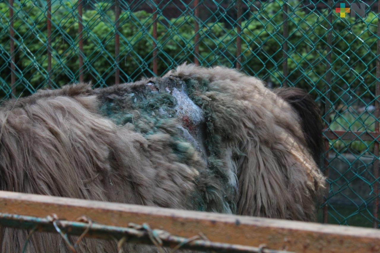Ambientalistas interpondrán una denuncia por situación de animales en zoológico de Veracruz