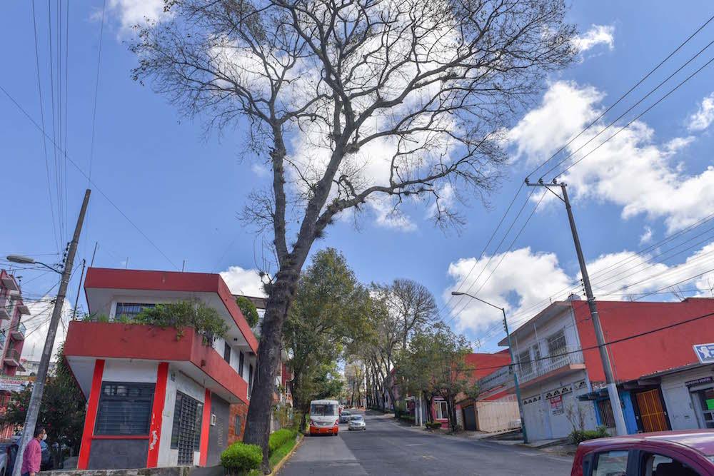 Por prevención se retirarán árboles en mal estado