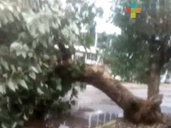 Frente Frío 4 provoca caída de árboles en Coatzacoalcos