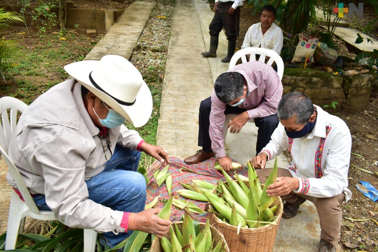 Chicomexóchitl, la ofrenda a San Miguel que prepara para el Xantolo