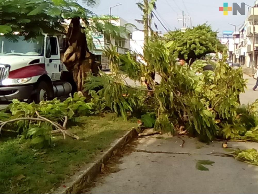 Por caída de árbol cierran circulación en avenida de Coatzacoalcos, sin reportarse daños