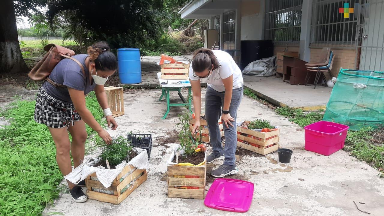 Huertos en casa benefician a 100 familias de comunidad de Boca del Río