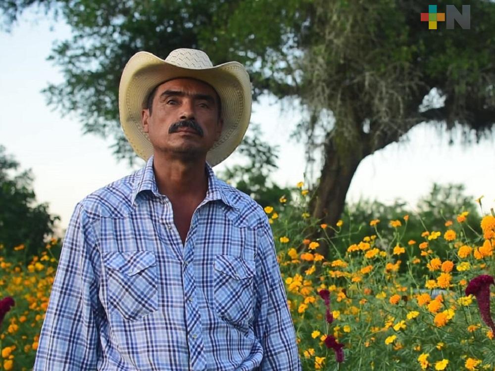 Agricultores de la Huasteca comenzaron la venta de flor de Cempasúchil