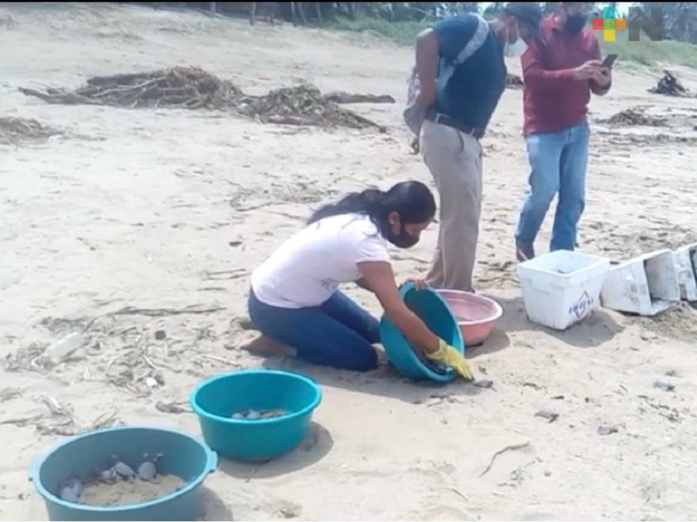 Liberan crías de tortugas en playas de Guillermo Prieto de Coatzacoalcos