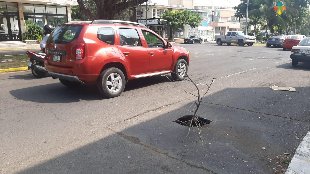 Piden reparar hundimiento en avenida Cristóbal Colón del municipio de Veracruz