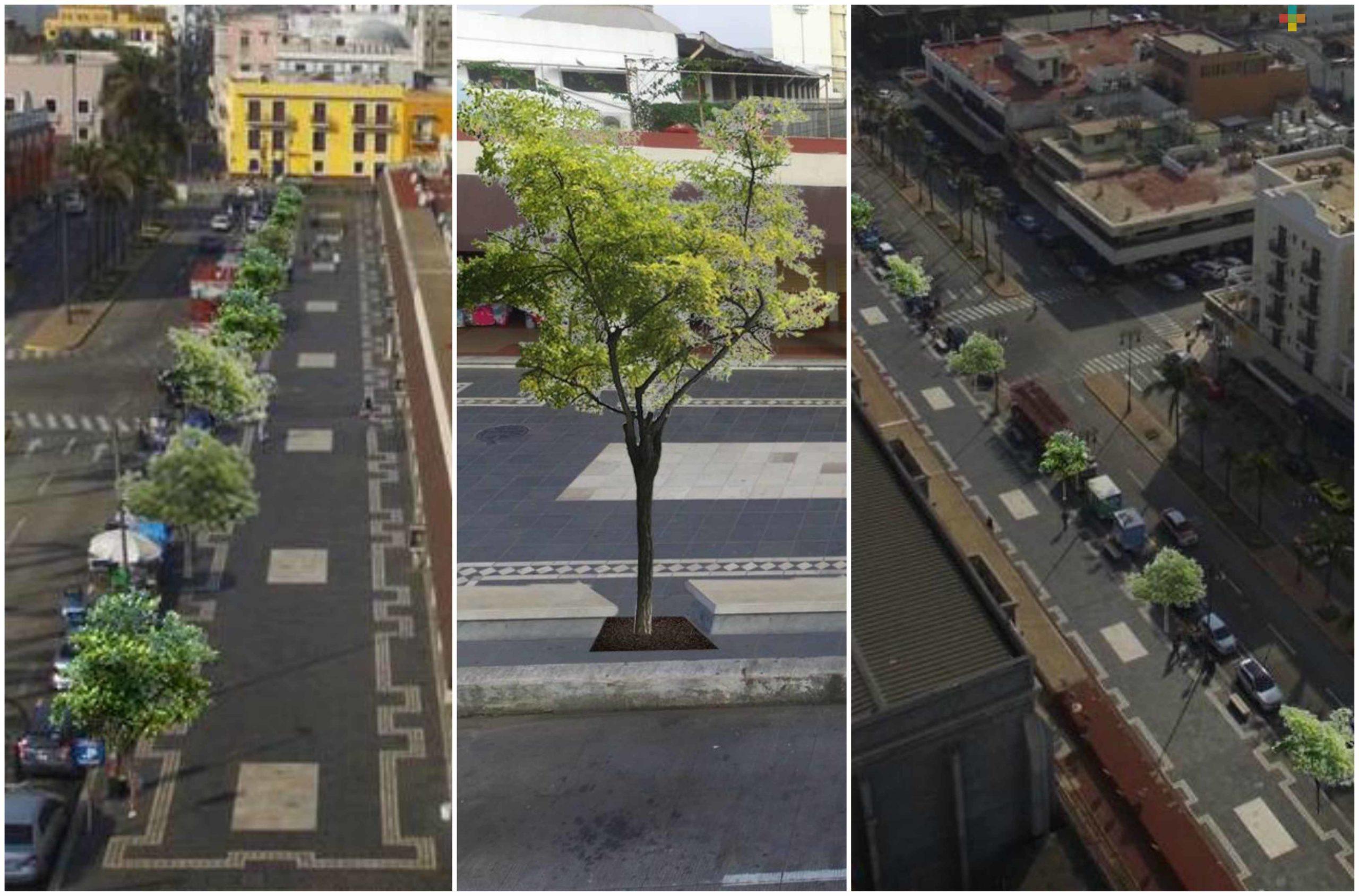 Proponen plantar árboles en el malecón de Veracruz
