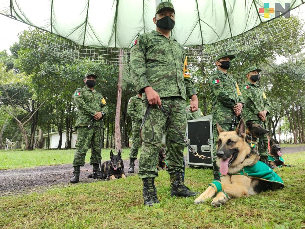 Batallón de Infantería realizó demostración de binomios caninos que participan en plan DN-III-E