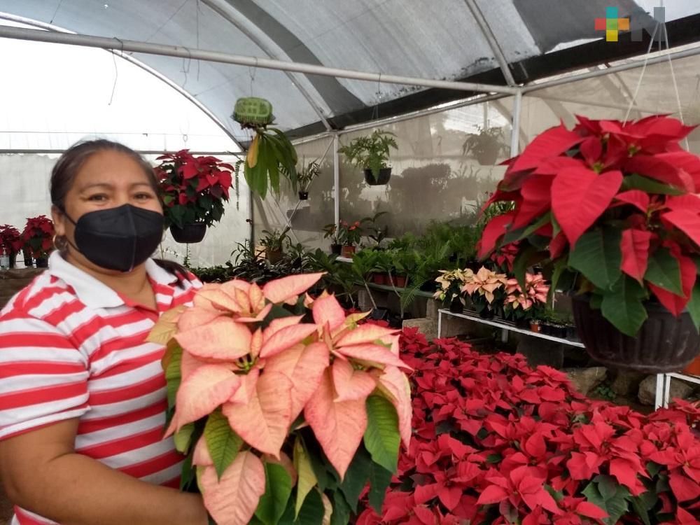 Por temor a vender poco, productores disminuyen siembra de Flor de Nochebuena