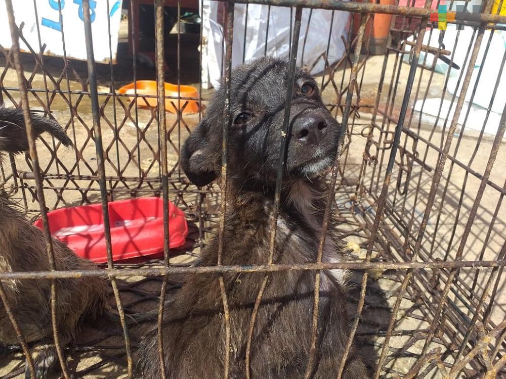 Salud Animal en Xalapa busca hacer valer Ley de Protección a las Mascotas