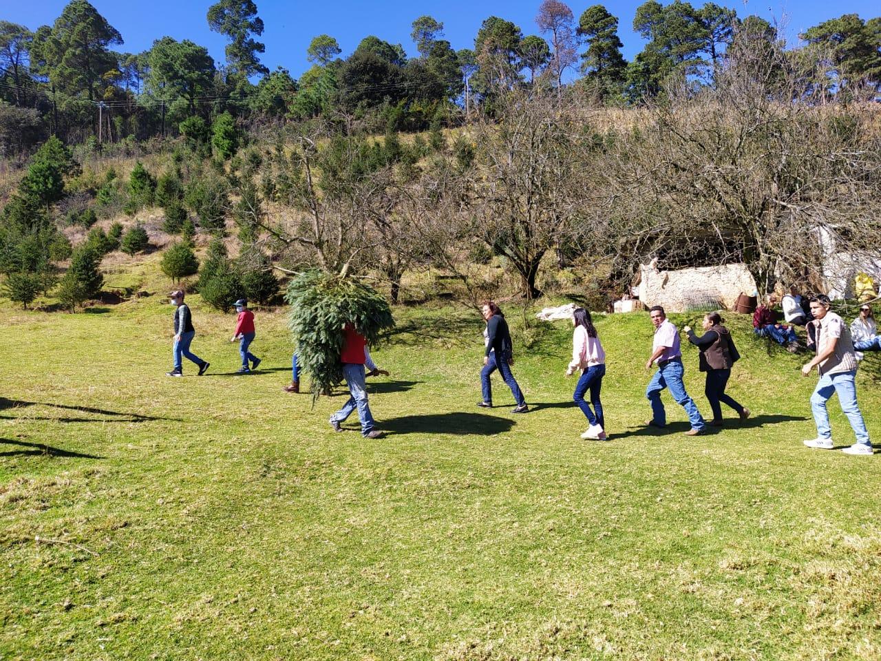 Venta de pinos navideños se mantiene a pesar del coronavirus, en la región de Las Vigas