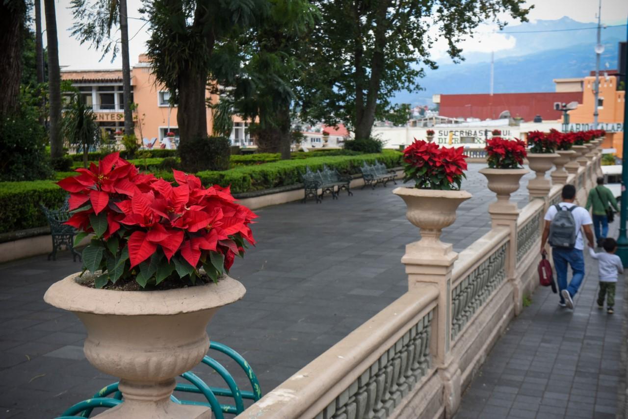 Cerca de ocho mil flores de Nochebuena adornarán parques y jardines de Xalapa