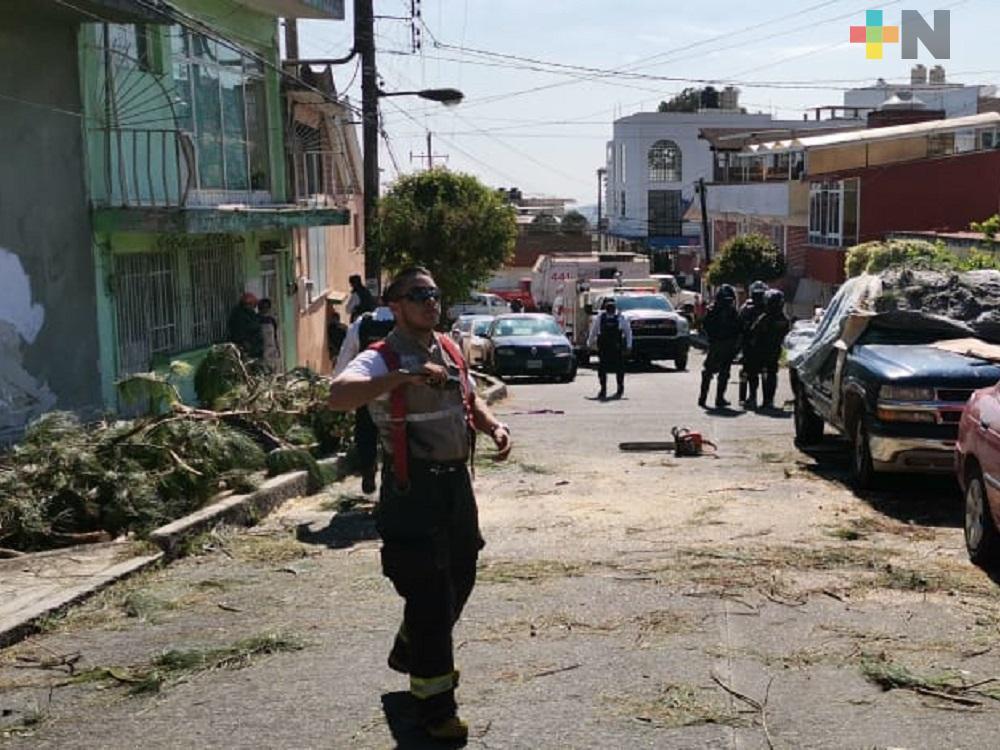 Árboles caídos el saldo de las afectaciones por viento arrachado en Xalapa