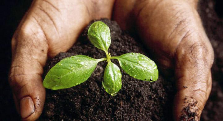 Impulsa México prácticas de manejo sustentable del suelo en todos los niveles de producción agropecuaria: Agricultura