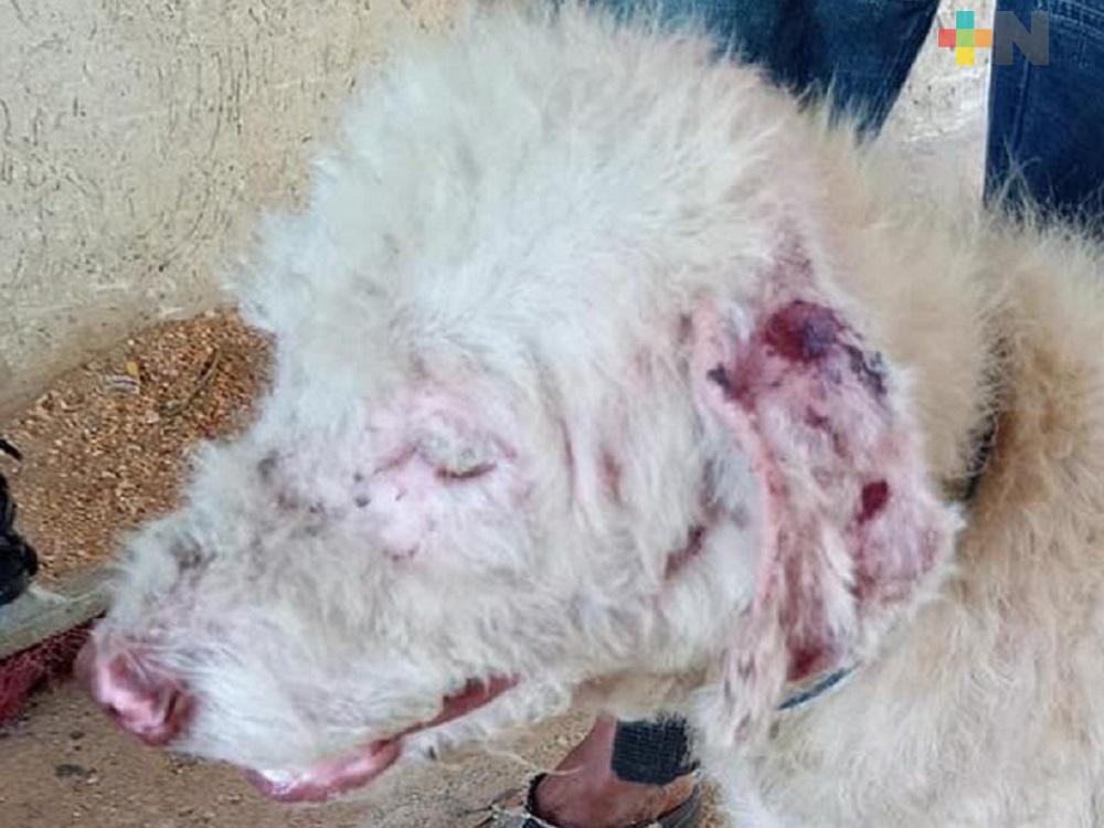 AMEDEA constata maltrato a perros en fraccionamiento de Coatzacoalcos