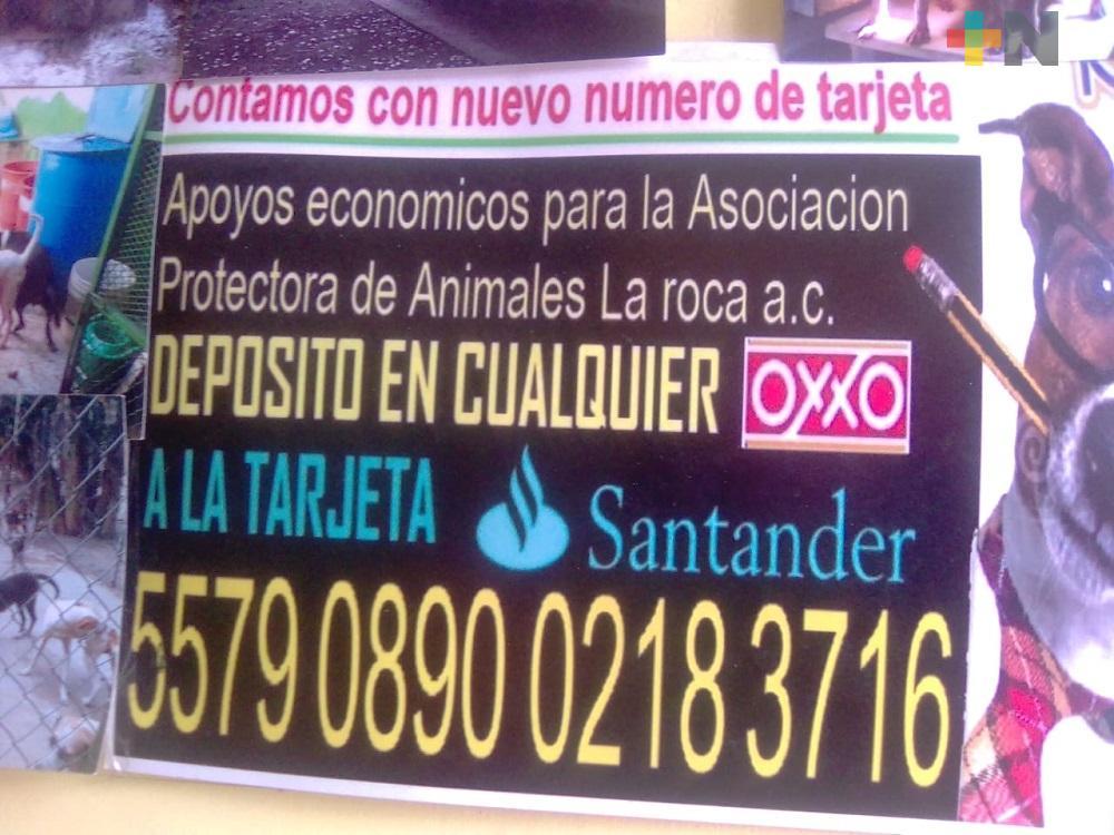 Asociación «La Roca» realizará croquetón, en Medellín de Bravo