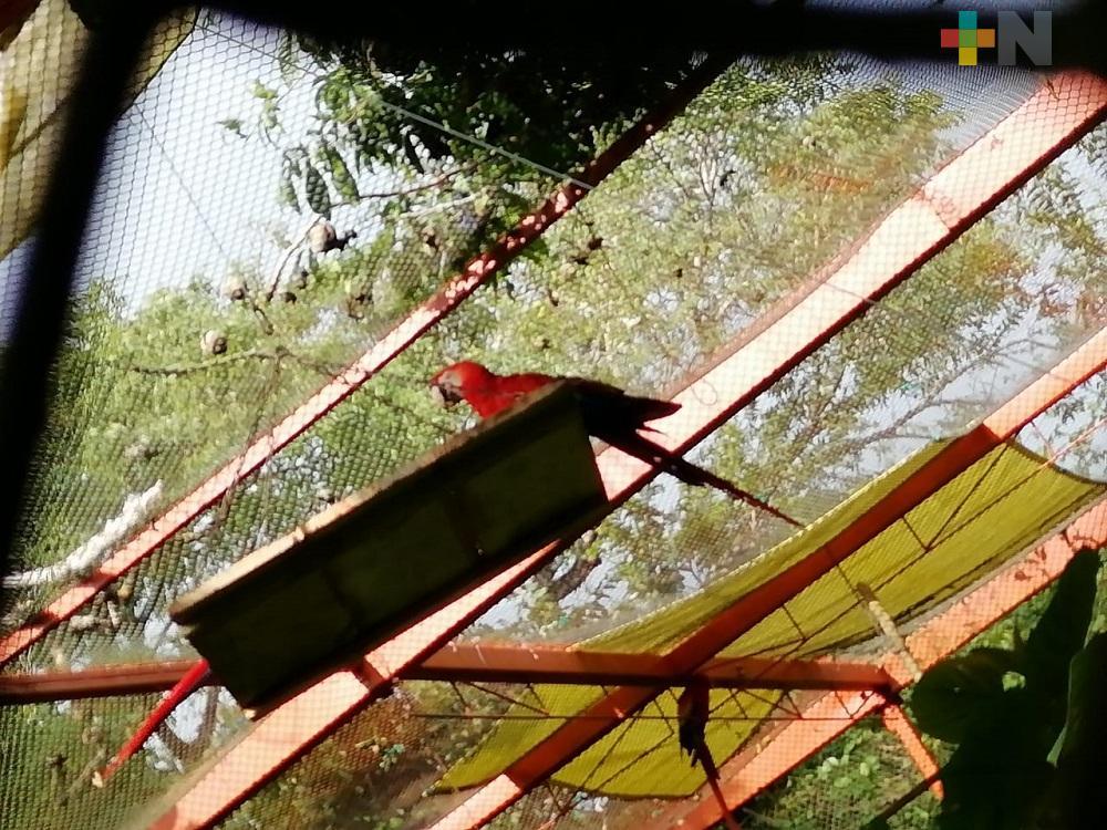 Frenan tráfico ilegal de la guacamaya roja en Los Tuxtlas