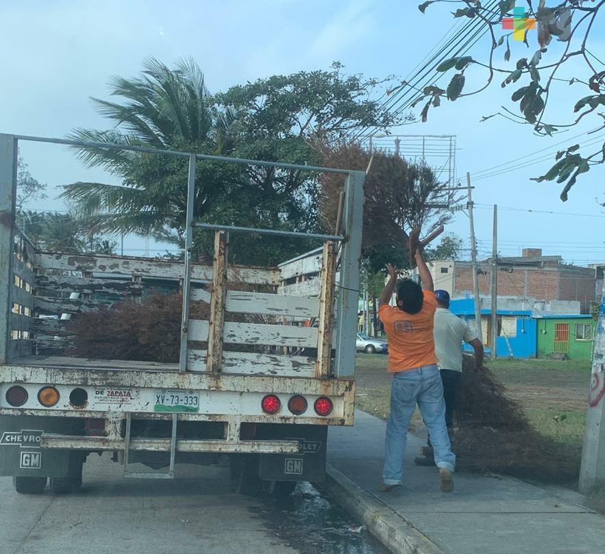 Retiran pinos navideños de predio en Boca del Río