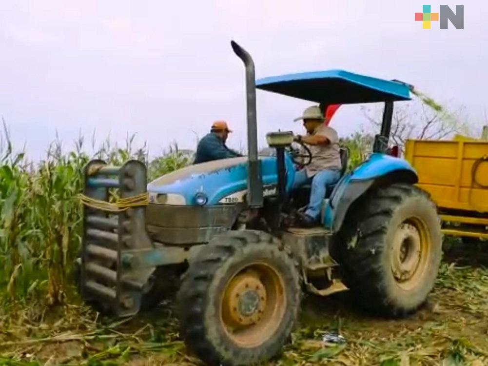 Por precio de garantía, aumentó casi cien por ciento ingreso de productores de maíz en Isla