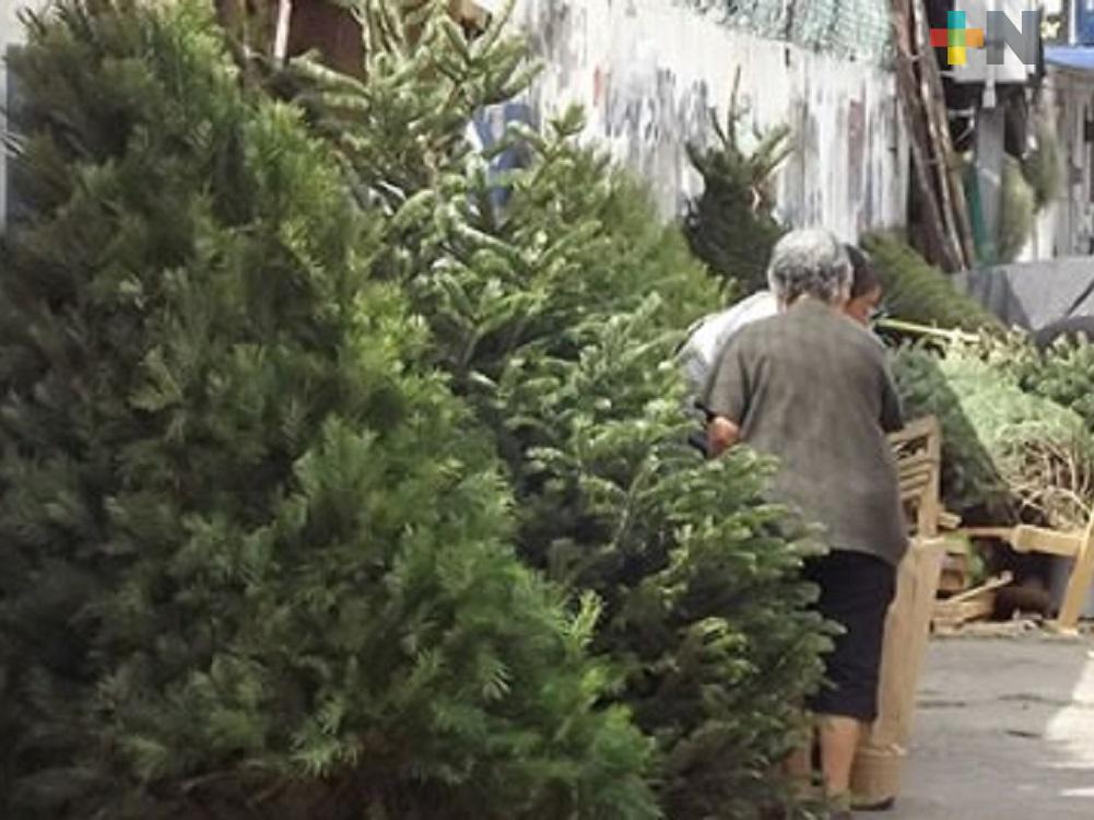 Más de 4,200 pinos se acopiaron en programa Recicla tu Navidad