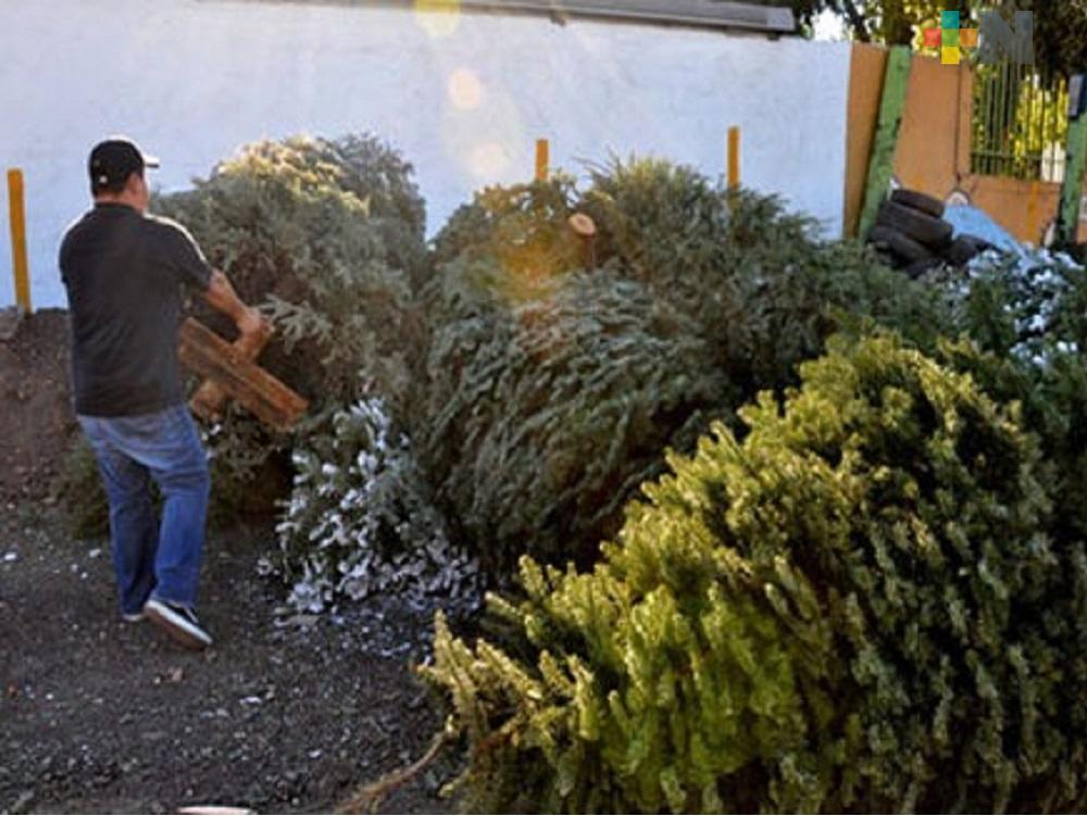 Programa Recicla tu Navidad ya da resultados en Tuxpan