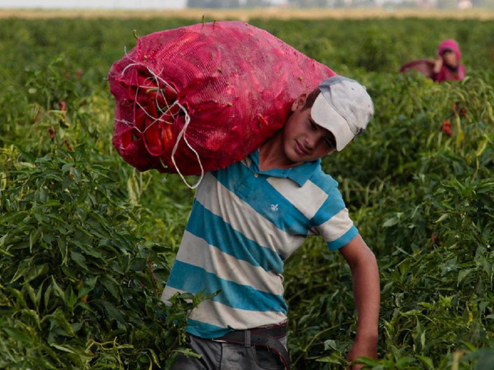 En el mundo hay todavía 152 millones de niños que trabajan y pandemia empeora su situación