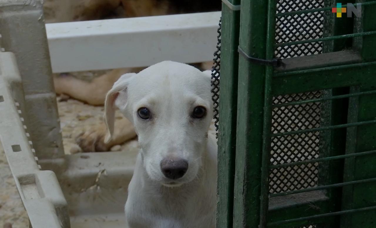 En 2020, municipio de Veracruz atendió 800 denuncias por maltrato animal