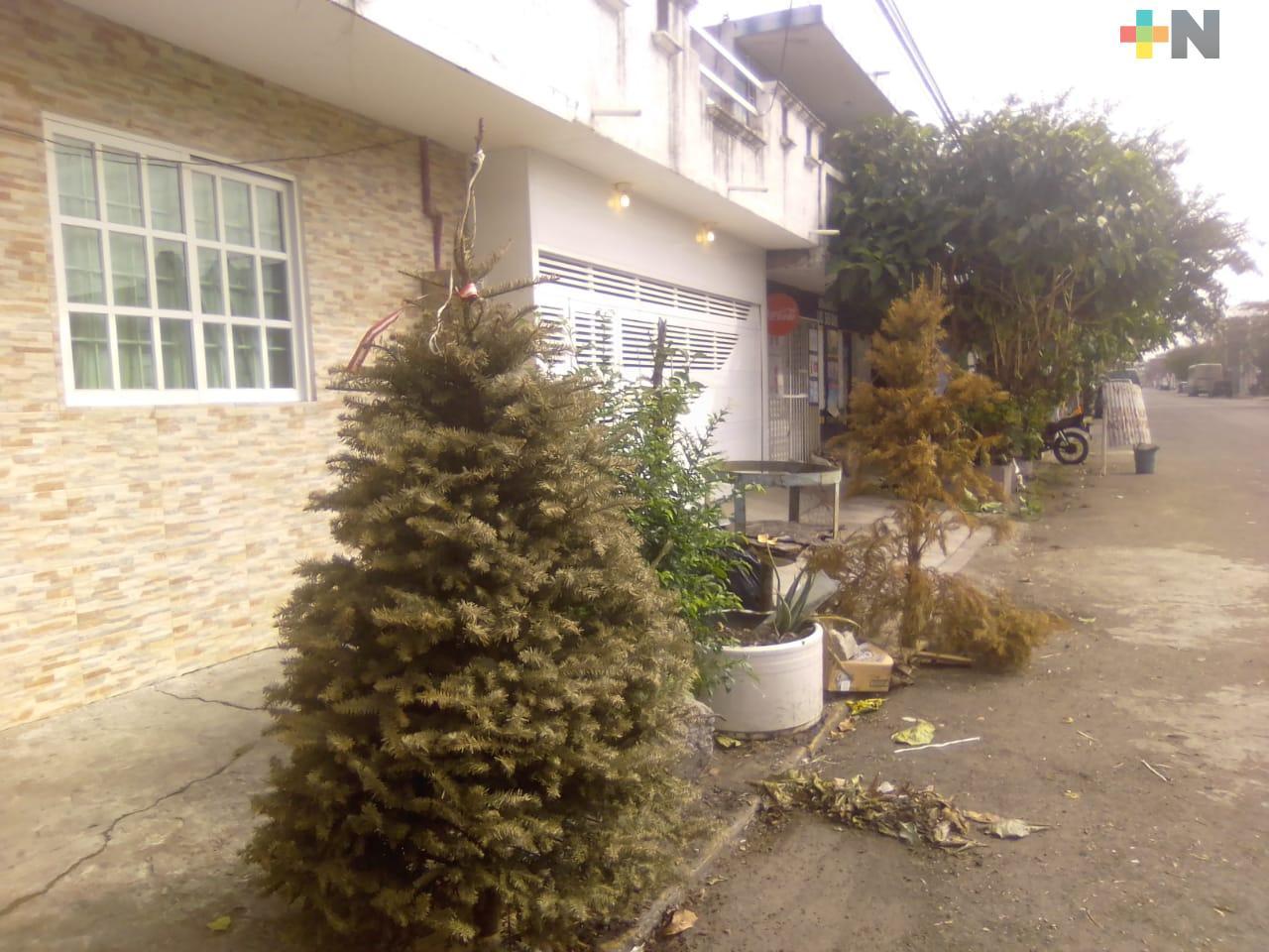 En Veracruz y Boca del Río siguen dejando pinos de Navidad en la vía pública