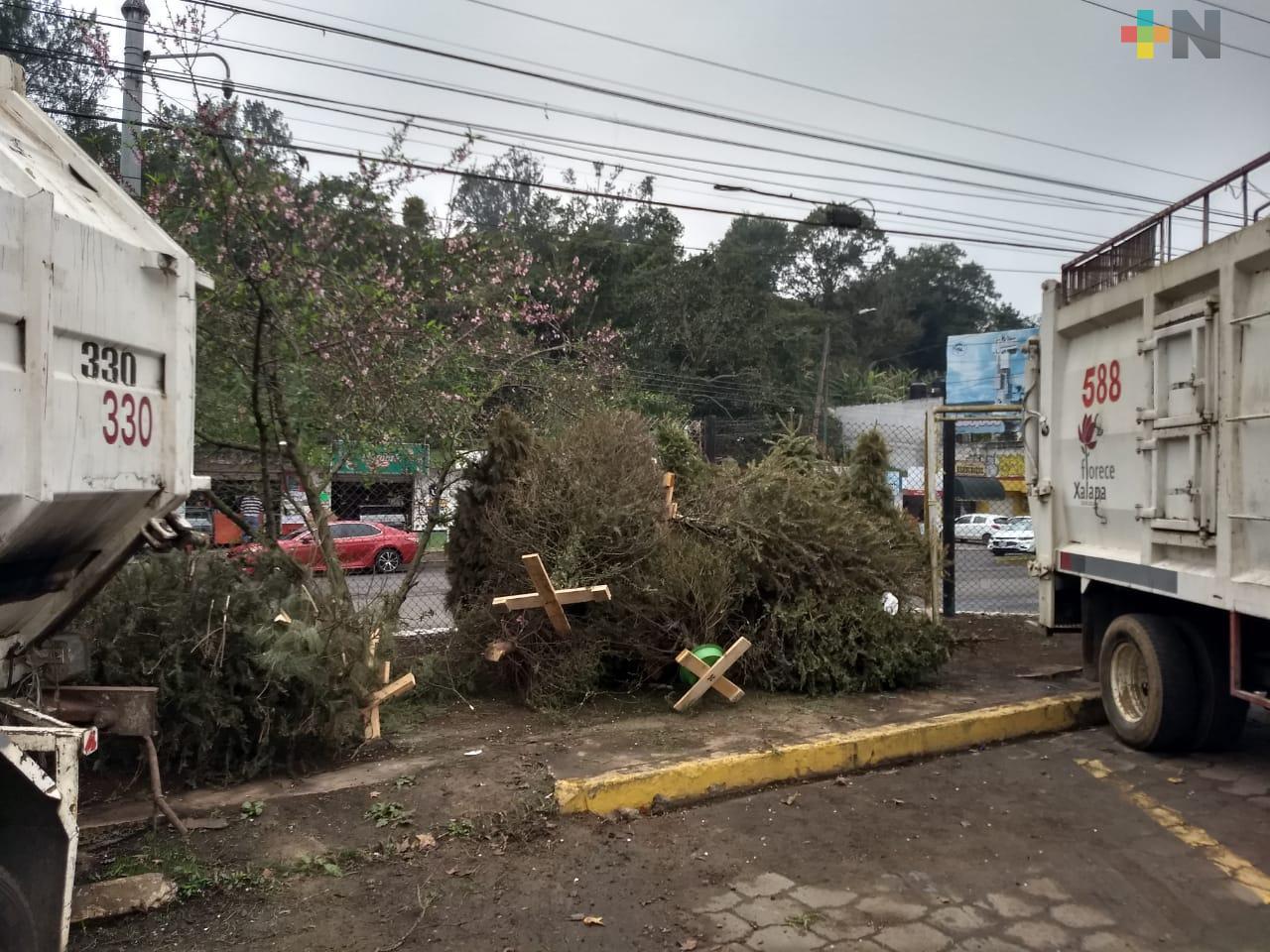 En Xalapa operan 14 centros de acopio del programa Recicla tu Navidad