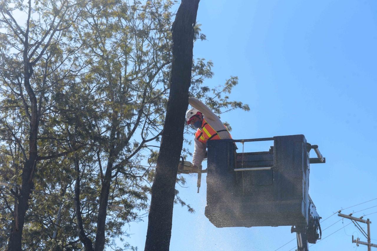 Inicia retiro de árboles muertos en Lázaro Cárdenas