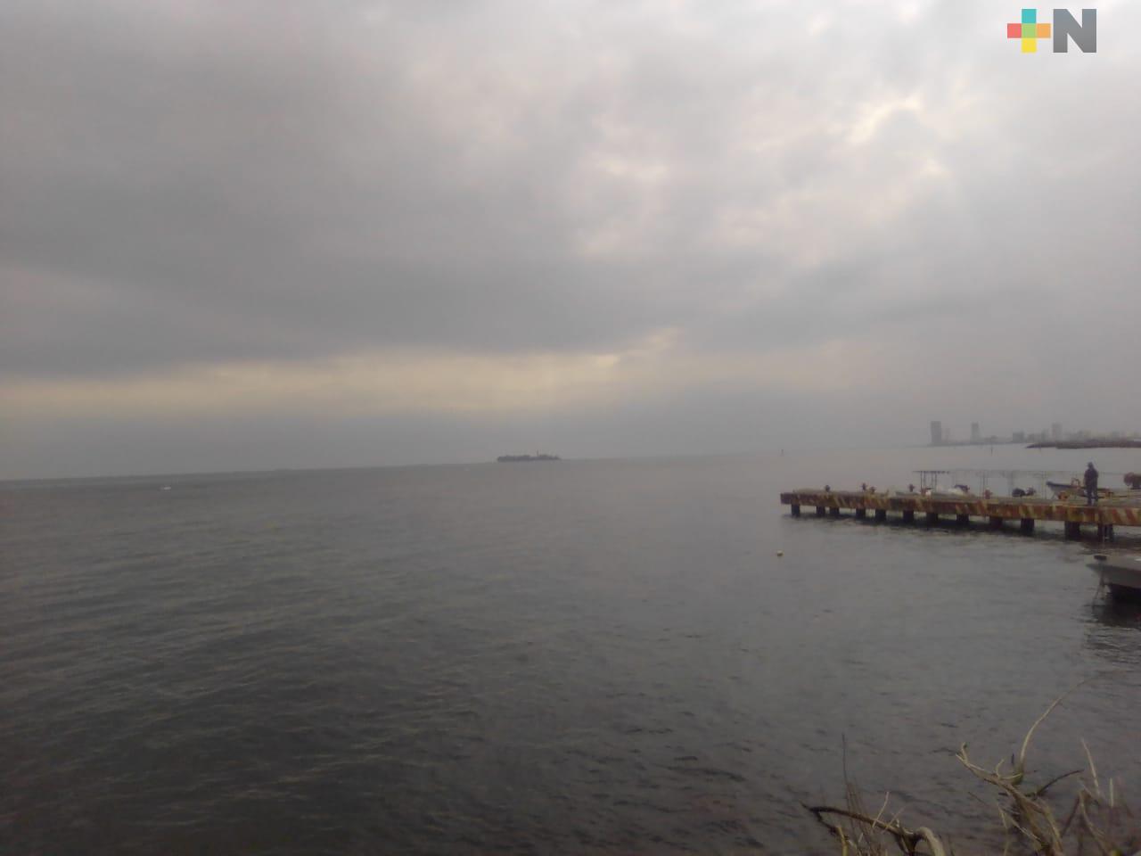 Han bajado reportes de avistamientos de especies marinas en cercanías de las costas veracruzanas
