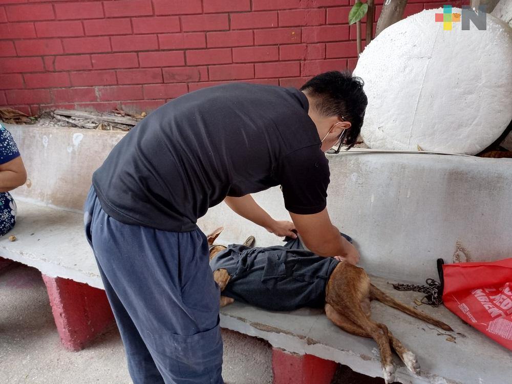 En Coatzacoalcos, Comunidad en Pro de los Animales de la Calle realizó jornada de esterilización