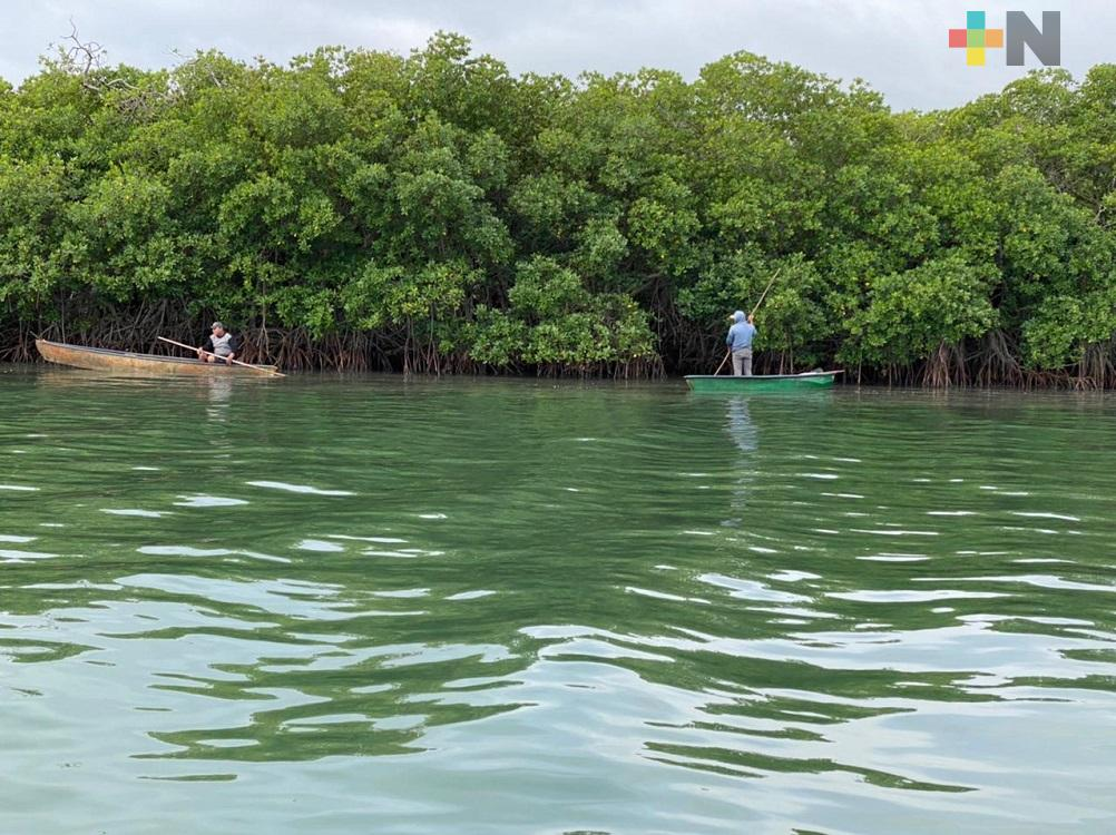 Falta de dragado en laguna afecta producción de ostiones en el sur de Veracruz