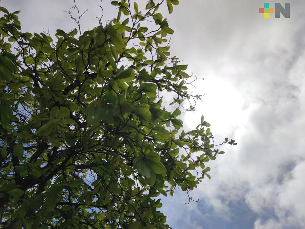Frente Frío 35 provoca descenso drástico de temperatura en zona sur de Veracruz