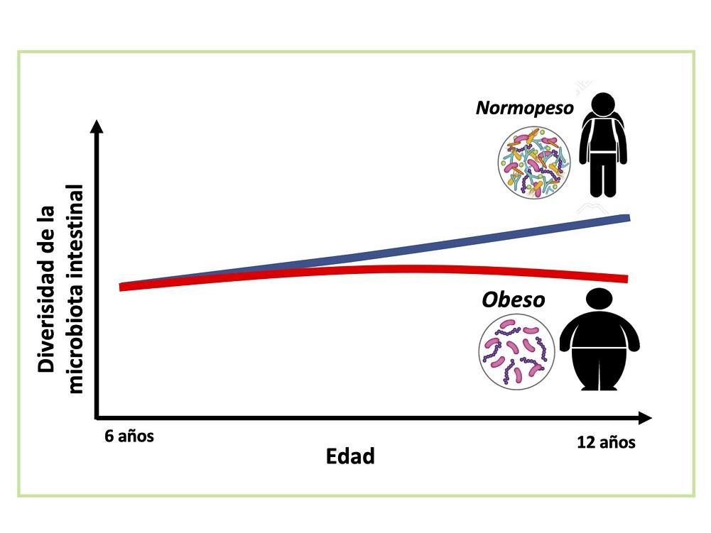 Influye microbiota intestinal en desarrollo de obesidad e hígado graso no alcohólico