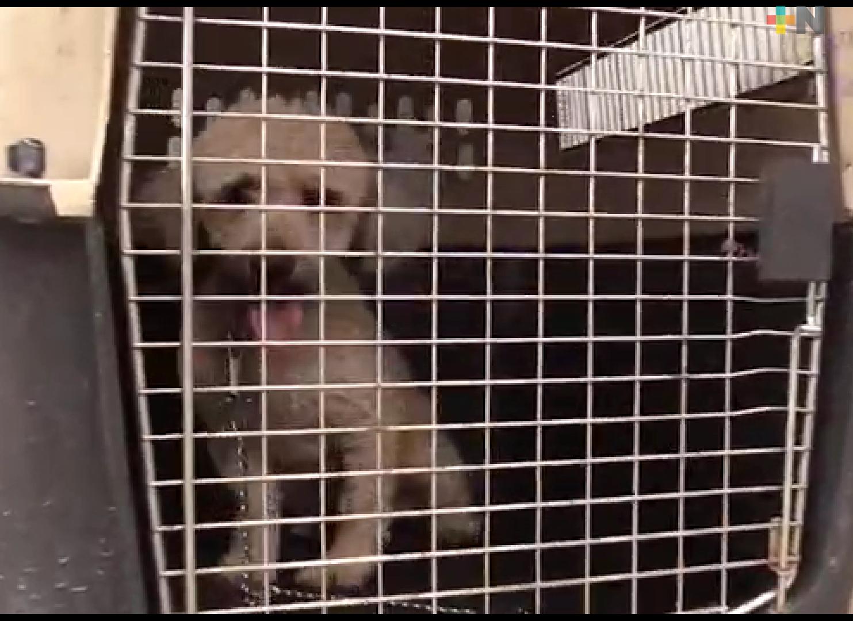 Invitan a seguir adoptando mascotas en el Centro de Bienestar Animal de Córdoba