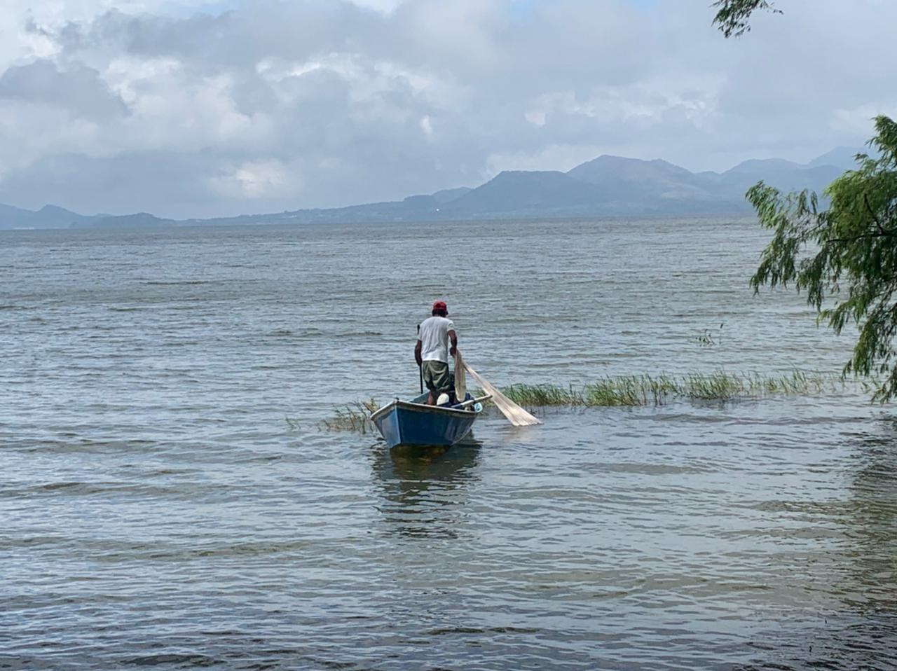 Con esquema de reconversión productiva, promueve SEDARPA desarrollo de viveros y ganadería en Los Tuxtlas